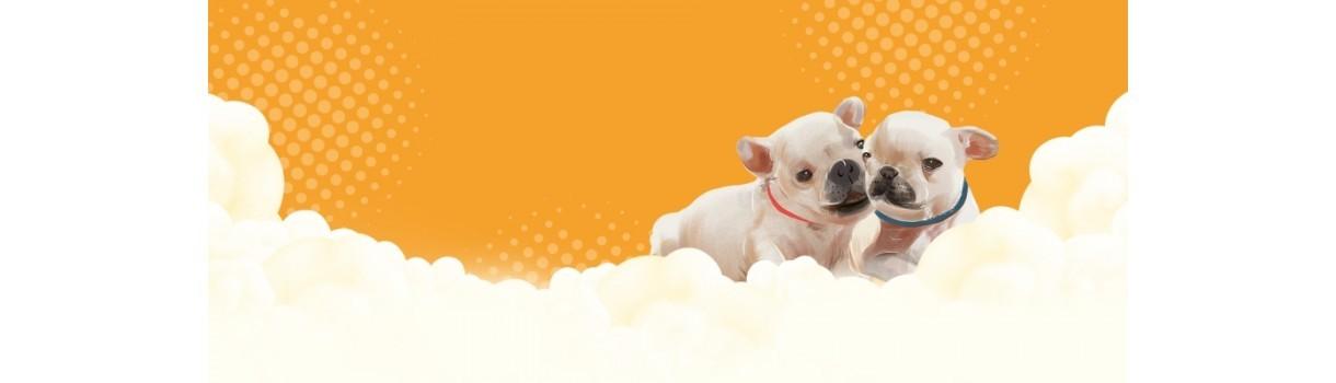 Bine ati venit pe blogul PetShop Mall